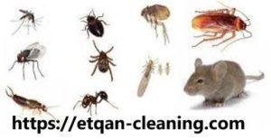 ارخص شركة مكافحة حشرات